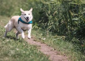 How Fast Do Dogs Really Run?