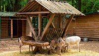 How to Make Homemade Deer Feeder?