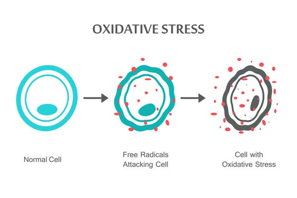 how to reduce oxidative stress