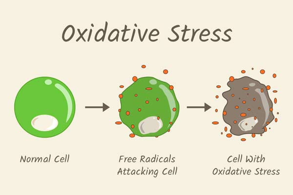 oxidative stress with antioxidants
