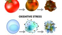 Stay Away From oxidative Stress with Some Easy tricks