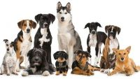 The Different Dog Breeds