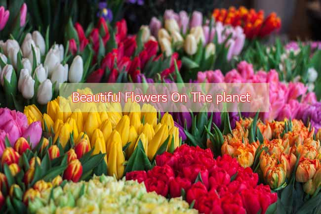 Top 5 Most Beautiful Flowers On The planet